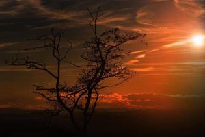 lumière couleur chaude ton orangé coucher de soleil arbre pénombre paysage