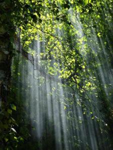 pluie de lumière arbre photographie nature